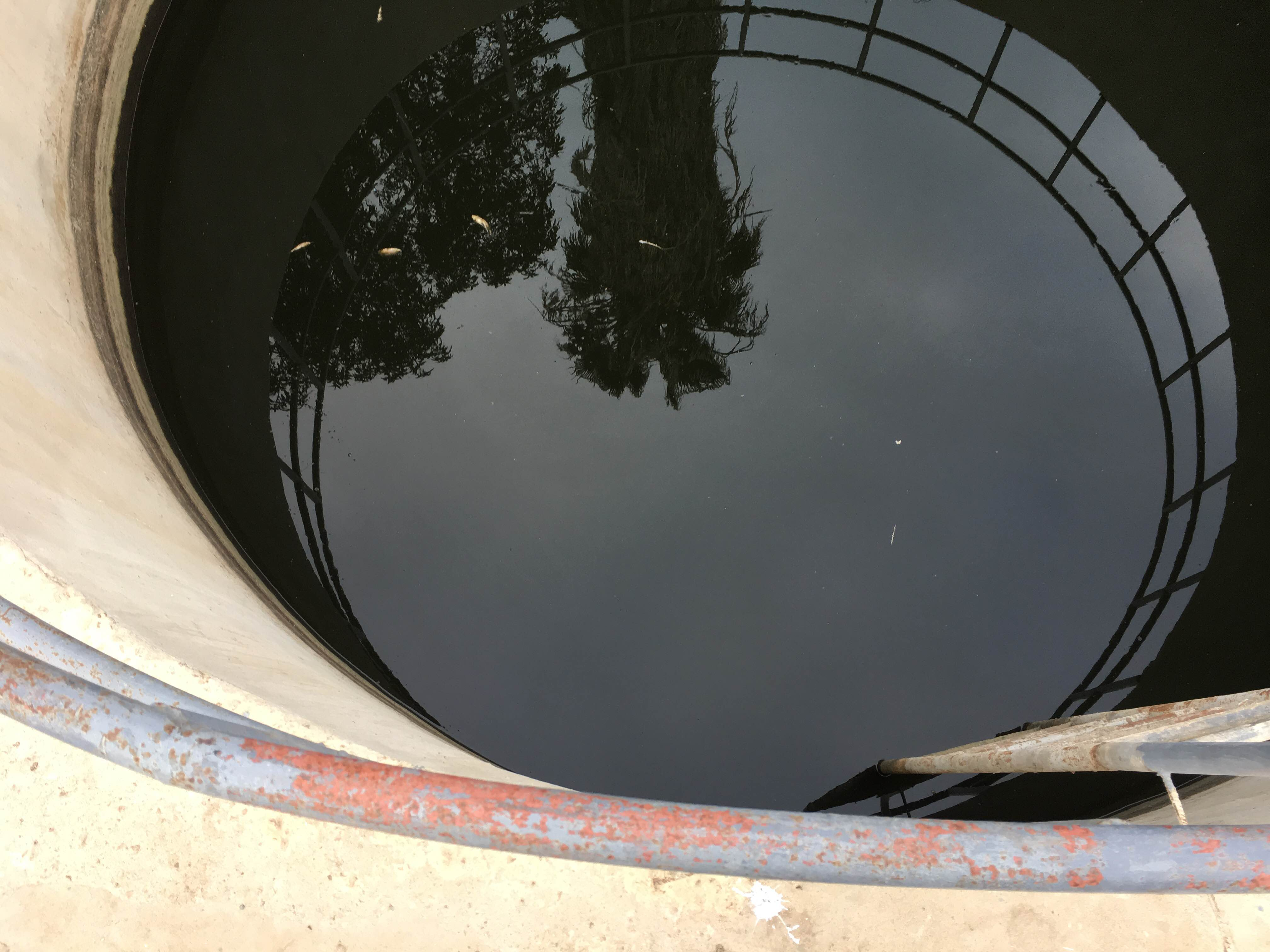 Dead fish in Fuwwah water treatment plant