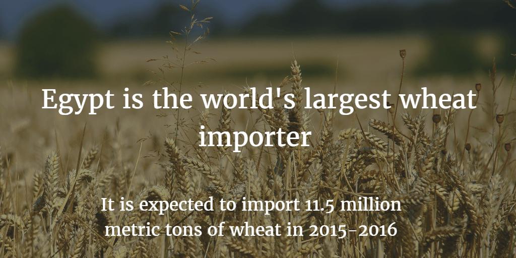 wheat-imports