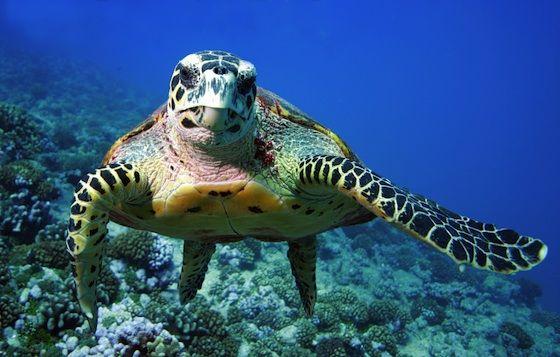 Alexandria Cracks Down On Hunting And Selling Endangered Sea Turtles Mada Masr Საკონდიტრო მადარტი ქმნის, მაღალი ხარისხის იგრედიენტებით დამზადებულ ქართულ საკონდიტრო ნაწარმს: www madamasr com